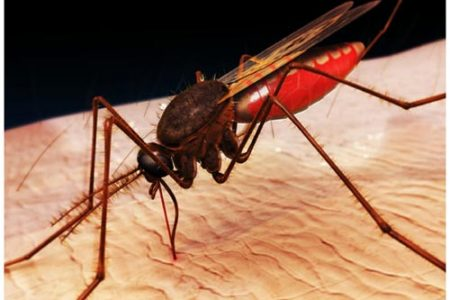phong-muoi-mosquito